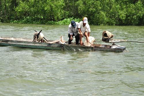 Khu bảo tồn ốc gạo Vĩnh Bình